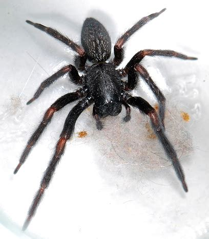 North Eastern Australian Spiders