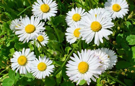 imagenes de flores medicinales plantas medicinales jardineria on