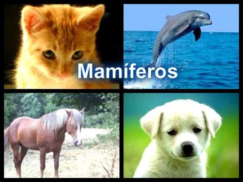 imagenes de animales vertebrados mamiferos mam 237 feros los animales