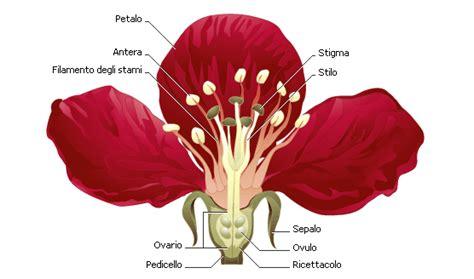 anatomia fiore informazioni sui fiori la struttura dei fiori