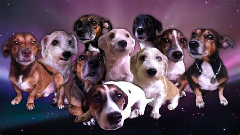 space names for dogs galaxy space dogs wallpaper best 12981 wallpaper high resolution wallarthd
