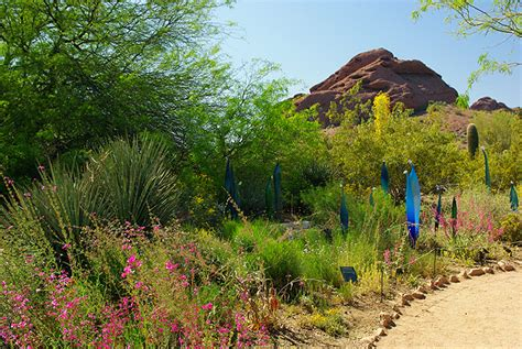 Arizona Botanical Gardens by Desert Botanical Garden
