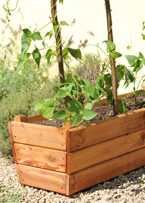buy a planter buy golden larch deep planter