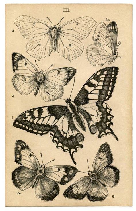 tattoo butterfly vintage 16 best gargoyle tattoos images on pinterest gargoyle