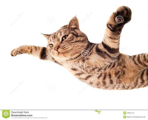 mammifero volante gattino divertente volante immagine stock immagine di