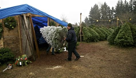 christmas tree lot business barry buckland runs his family legacy the oldest tree lot in east portland