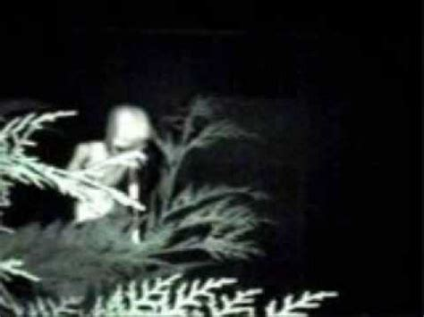 aliens caught on camera real or hoax