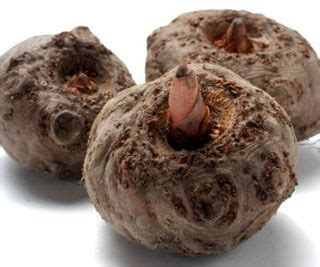 coupe faim naturel konjac bio anti cancer
