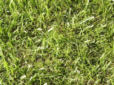 type of grass for garden help me with these type of weeds lizard lawn