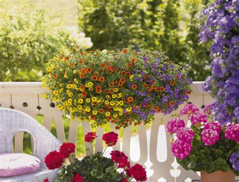 fiori da terrazza piante da esterno piante da balcone e da terrazza