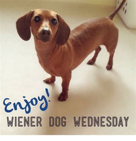 wiener meme wiener wednesday meme on me me