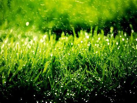 imagenes verdes hermosas verde bello color y bellas im 225 genes taringa