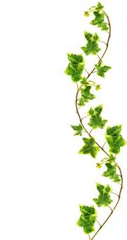 clipping path border made of green ivy isolated on white