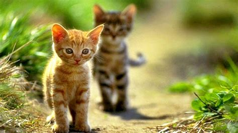 wallpaper of cat kitty cat wallpapers wallpaper cave