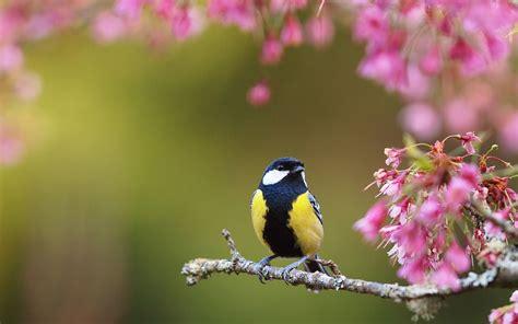 wallpaper flower and birds ultra hd bird spring flowers ultra hd animals wallpapers