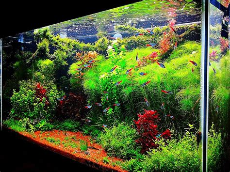 freshwater aquarium aquascape design ideas fish tank ideas interior design the unique of