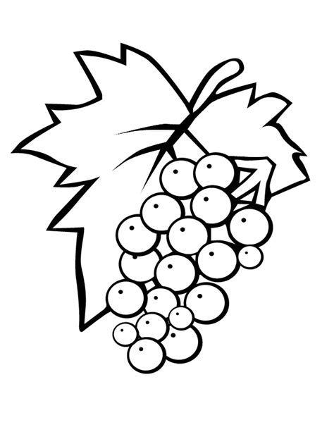purple grapes coloring page eps red grapes printable coloring in pages for kids