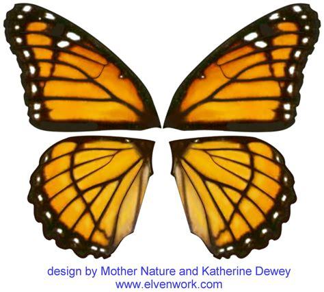 Butterfly Wings butterfly wing design www imgkid the image kid has it