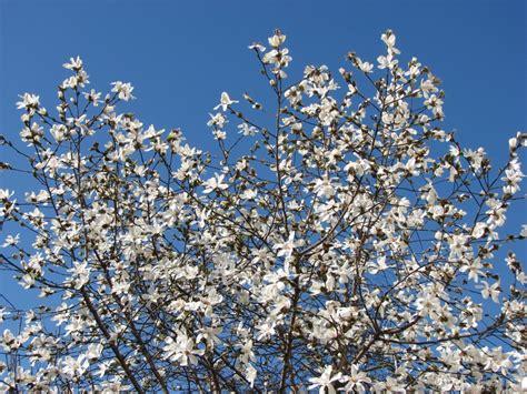 fiori fotografie enzorosso fiori sfondi gratis