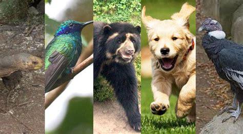 imagenes interesantes de animales diez datos curiosos que no conoc 237 as sobre los animales en
