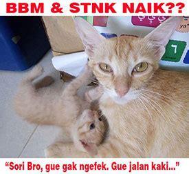 humor meme gambar kucing lucu  gokil