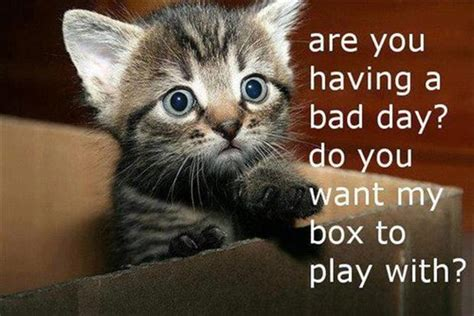 funny pictures of kittens   saboteur365