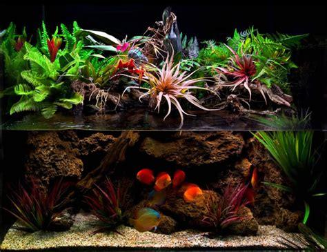aquascape setup paludarium with mist maker uk aquatic plant society