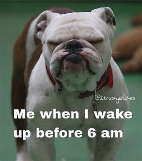 libro before i wake up 17 best images about fresno state fun on mondays wake up and french bulldogs