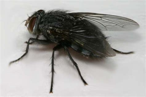 How To Get Rid Of Black Flies In Bathroom by 9 Ways To Protect Yourself From Midges Top 8 Best