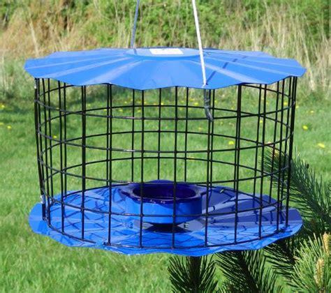 bluebird feeder bluebirdnut
