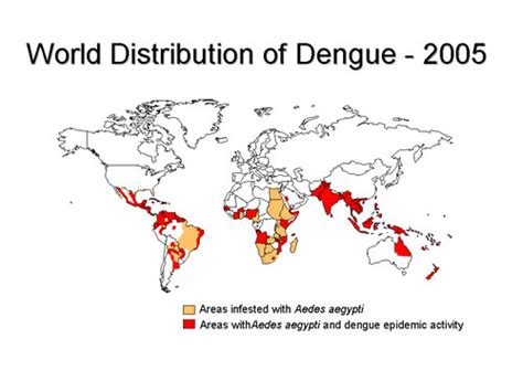 the big picture book of viruses dengue fever