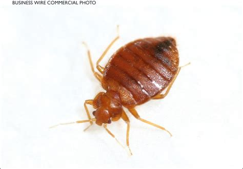 bed bugs in ohio bed bug bite treatment