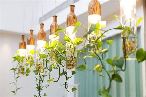 4 New Trends for Indoor Vines   Trendspot Inc.