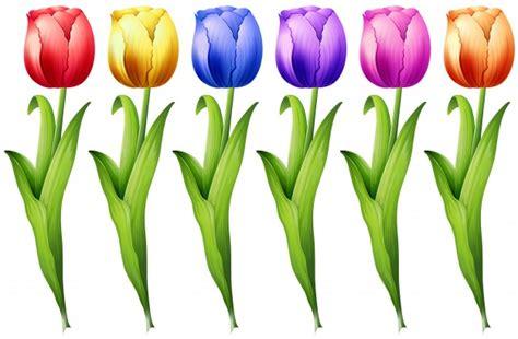 tulipan descargar vectores gratis
