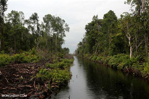 amazon di indonesia debat kebijakan stop deforestasi dan konservasi hutan