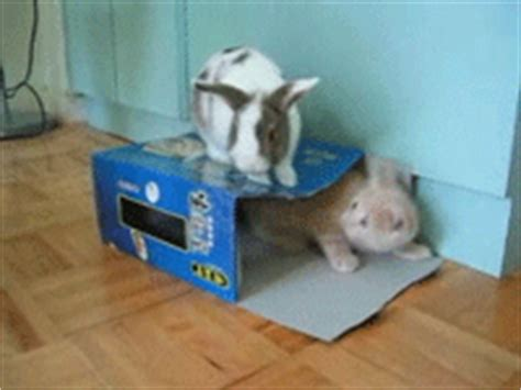 haus gif haus gif find on giphy