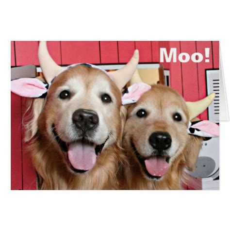 golden retriever costume for person golden retrievers in cow costumes greeting card zazzle