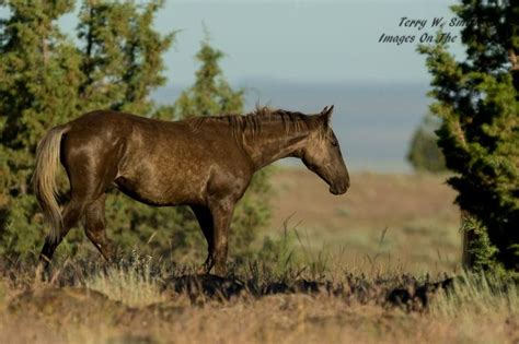 pictures mustang horse with smoke 771 best images about horses smoke on pinterest horses