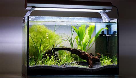 Aquarium Ohne Pflanzen Einrichten 6848 by Nano Aquarium Einrichten Aquariumeinrichten Wie