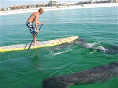 sw boat tours orlando fl paddle board rentals and lessons billy s sanibel bike