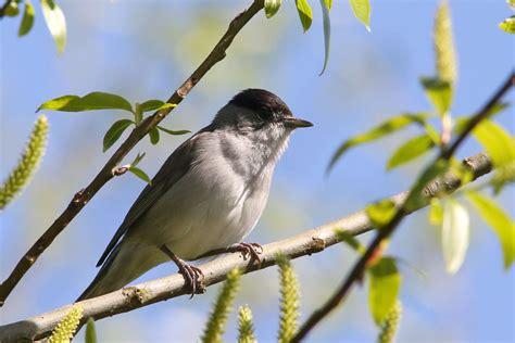 garden birds search results for matt sewell garden birds