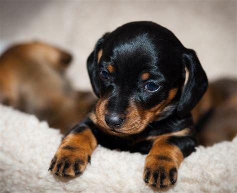 cute tiny dog breedspet  gallery dog pet  galleryakndeo