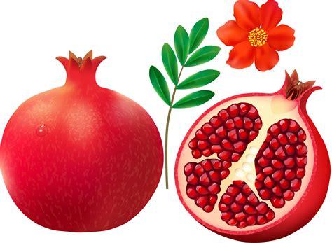 pomegranate clipart pomegranate clip art images