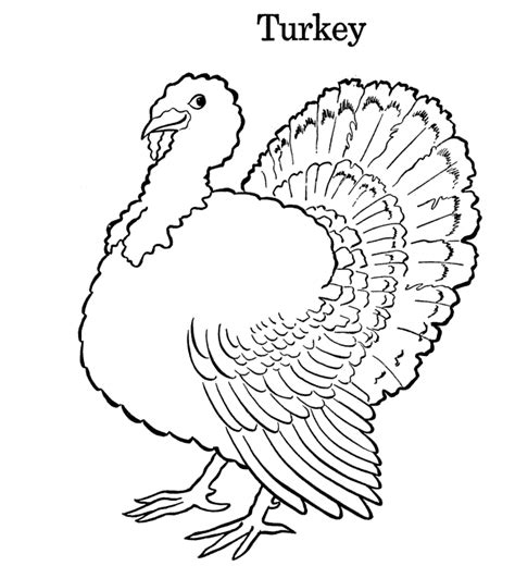coloring pages of cute turkeys colours drawing wallpaper printable thanksgiving coloring