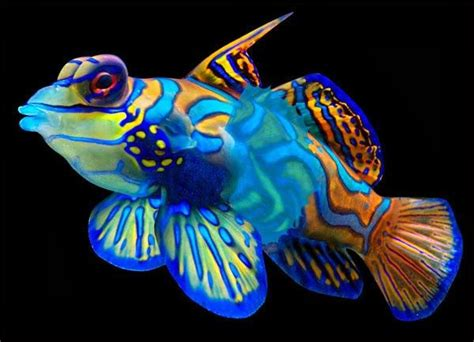 what color are fish 25 best ideas about colorful fish on pretty