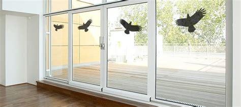 fenster isolieren gegen k lte vogel fliegt gegen fenster was kann dagegen tun