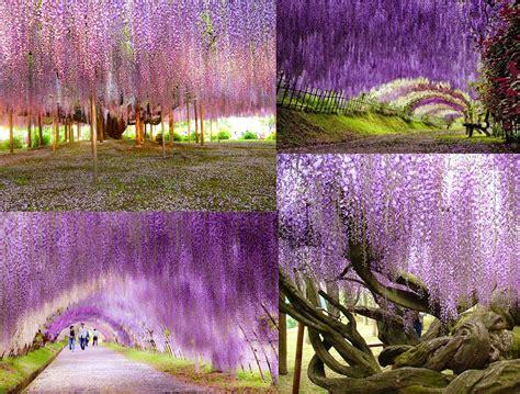 giardino fiorito il giardino fiorito ladri di bellezza
