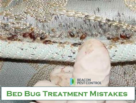 most effective bed bug treatment most effective bed bug treatment 28 images bed bug
