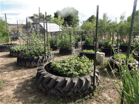 Garden Using Tires Use Tires Culverts To Grow Vegetables Personal Liberty 174