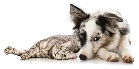 how to house train an adopted dog how to adopt a dog if you already have a cat top dog tips